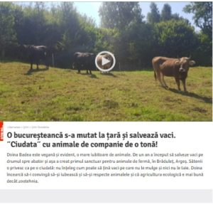 O bucureșteancă salvează vacile de la moarte. Captură de pe site-ul Libertatea
